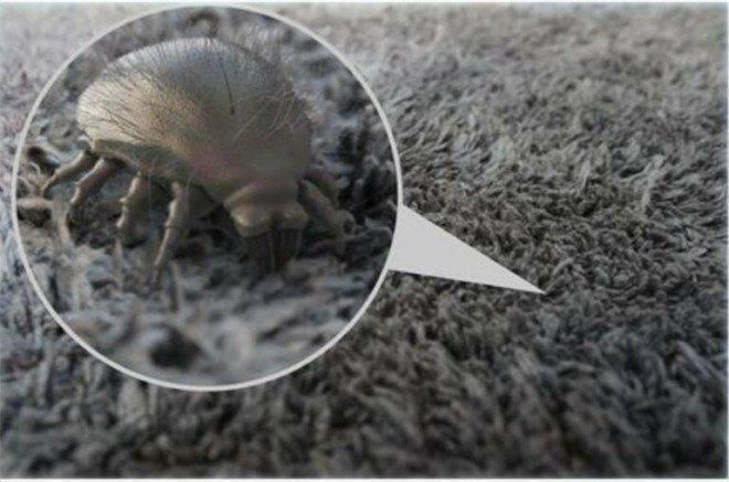 Как избавиться от пылевых клещей в квартире
