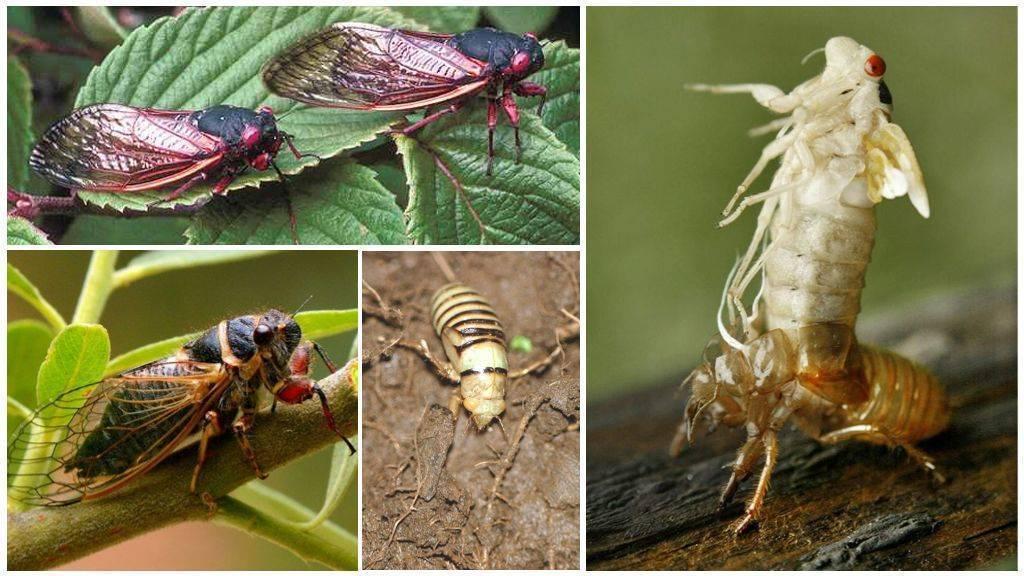 Полосатая муха, похожая на осу
