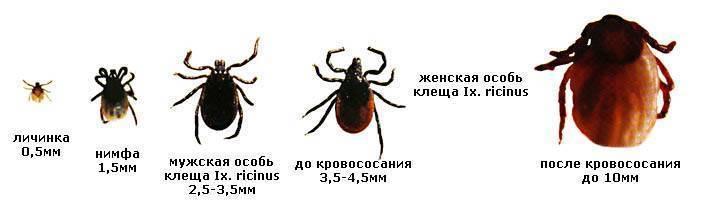 Где водятся энцефалитные клещи в россии