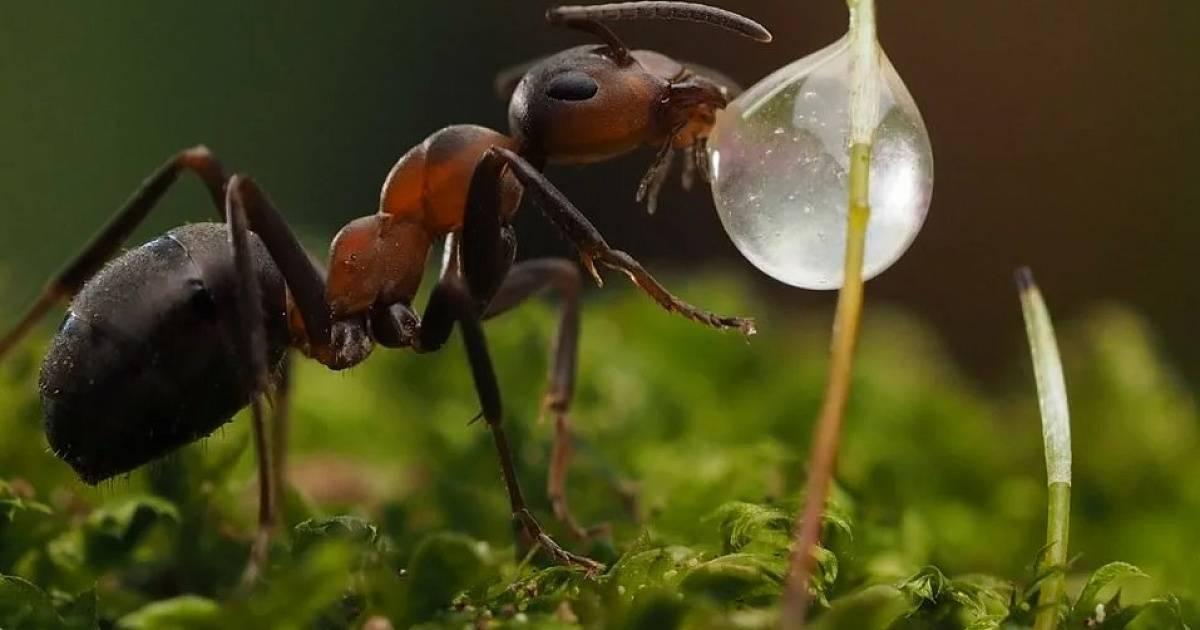 Виды муравьев