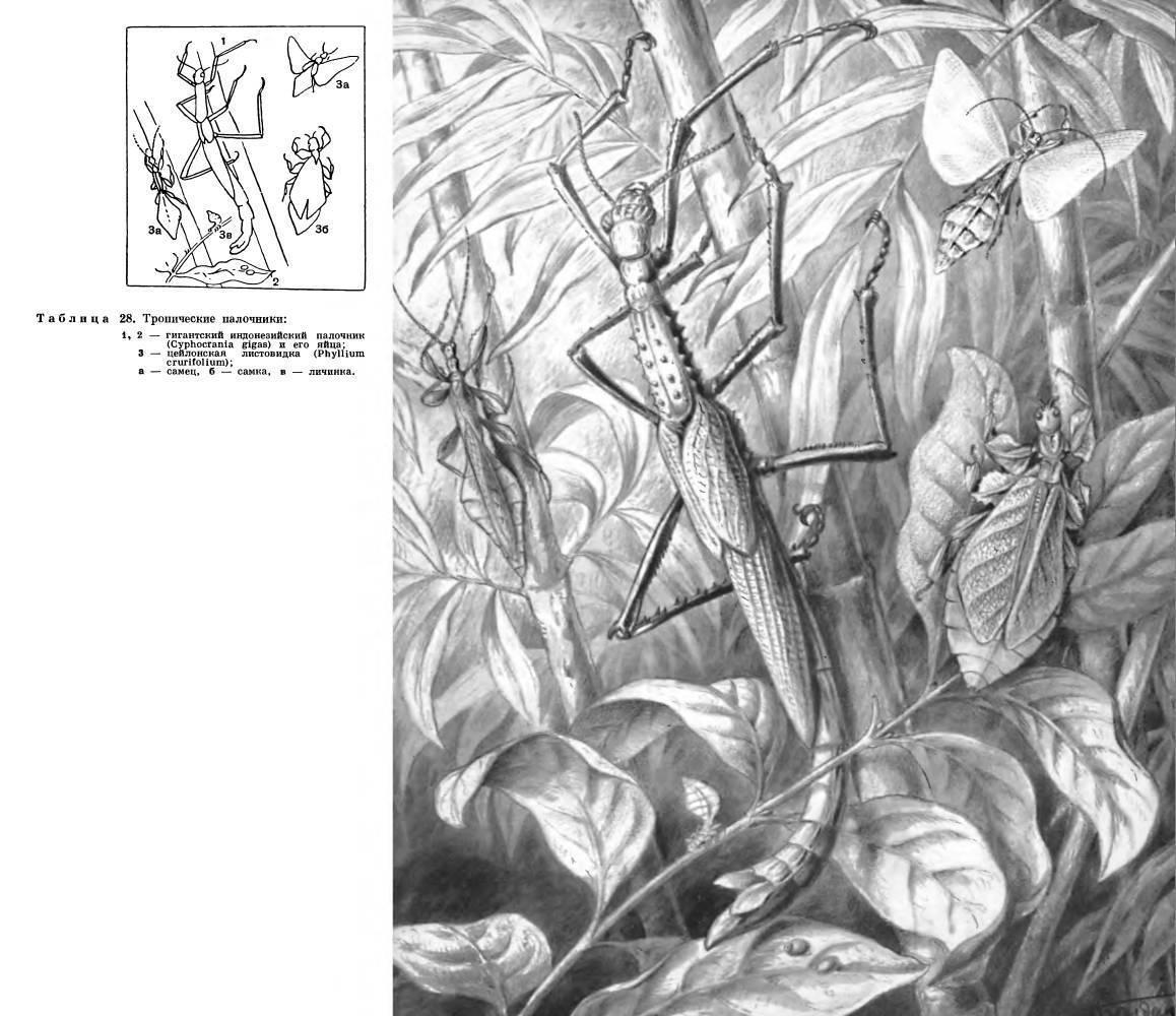 Мухи, минирующие листья