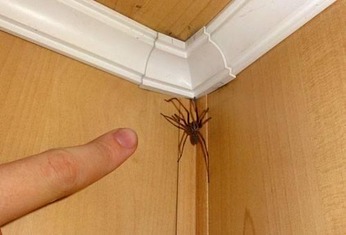Как избавиться от пауков в доме: инсектициды, народные средства и важные рекомендации. эффективные химические средства для борьбы с пауками в квартире
