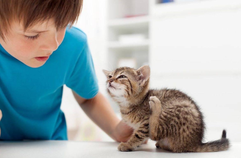 Передаются ли кошачьи блохи человеку, какой вред они несут?
