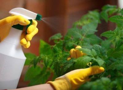 Кальцинированная сода: применение в саду и огороде, способы, рецепты, видео