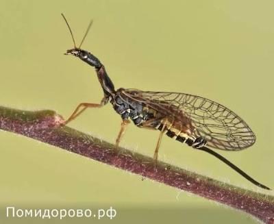 Какими бывают мухи: обзор назойливых насекомых от цеце до журчалки