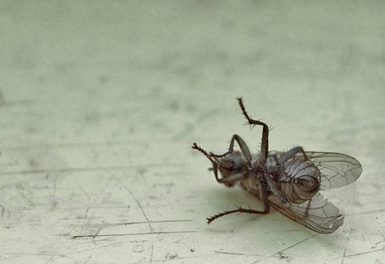 Как избавиться от мух в квартире и доме?