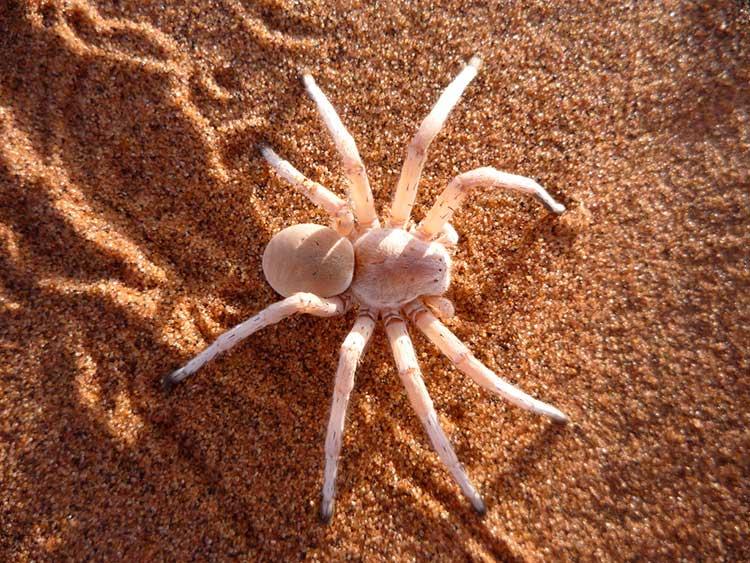 Сонник. пауки кчему снятся: большие, маленькие, мохнатые, черные