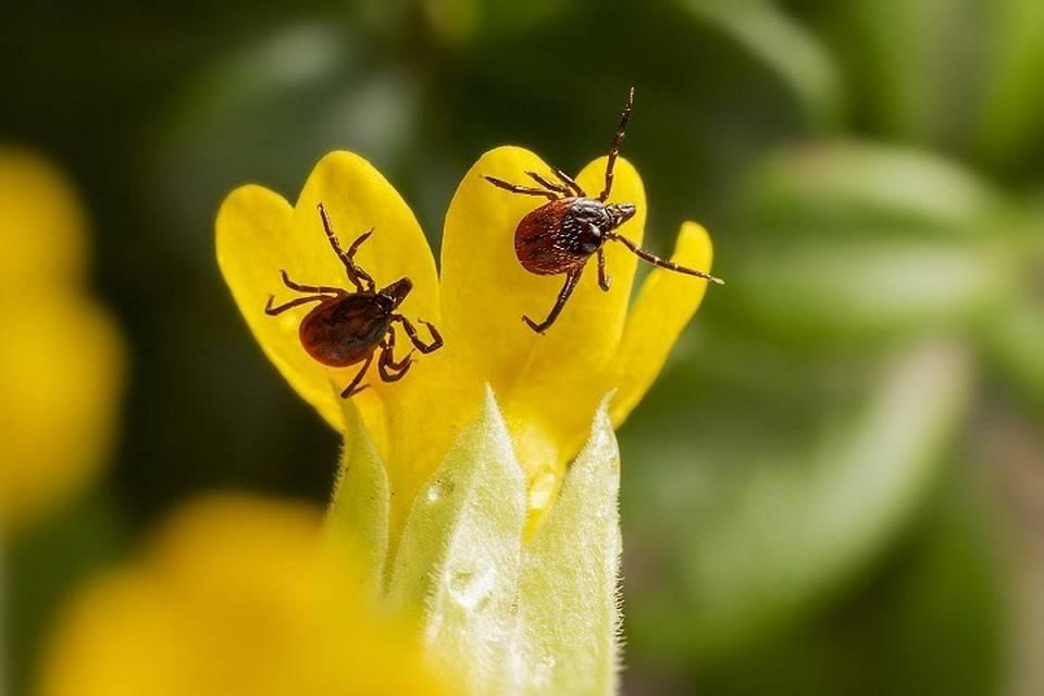 Средства борьбы с паутинным клещом: акарициды и инсектоакарициды