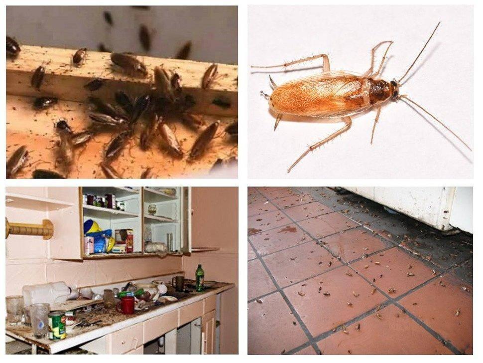 Как избавиться от тараканов в домашних условиях