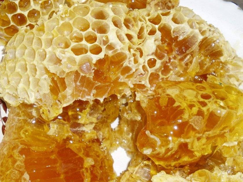 Осиный мед и его особенности