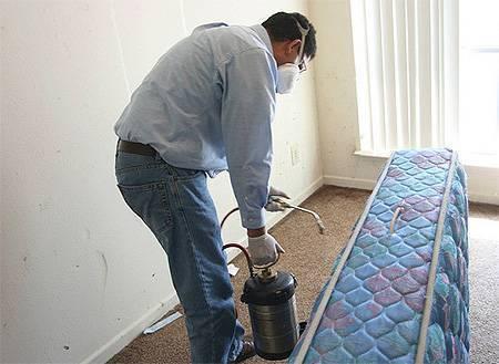 Как быстро избавиться от клопов в домашних условиях: лучшие средства
