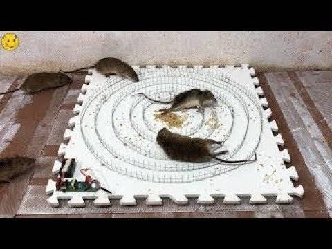 Виды ловушек от грызунов