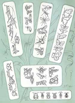 Жужелица-жук крапивница