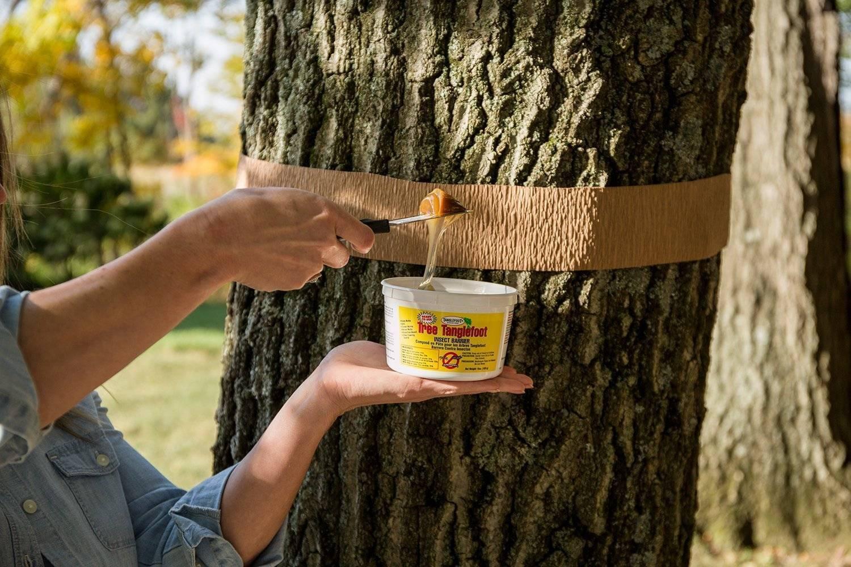 Как бороться с муравьями на фруктовых деревьях