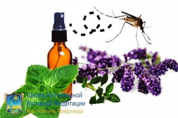 Эфирные масла: как спастись от насекомых и паукообразных!