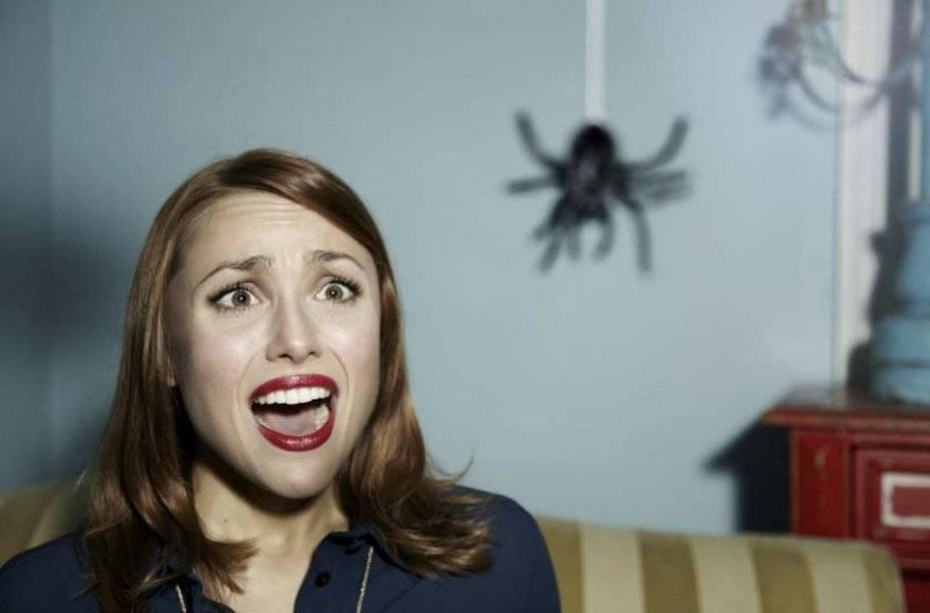 Как и почему появляются домашние пауки