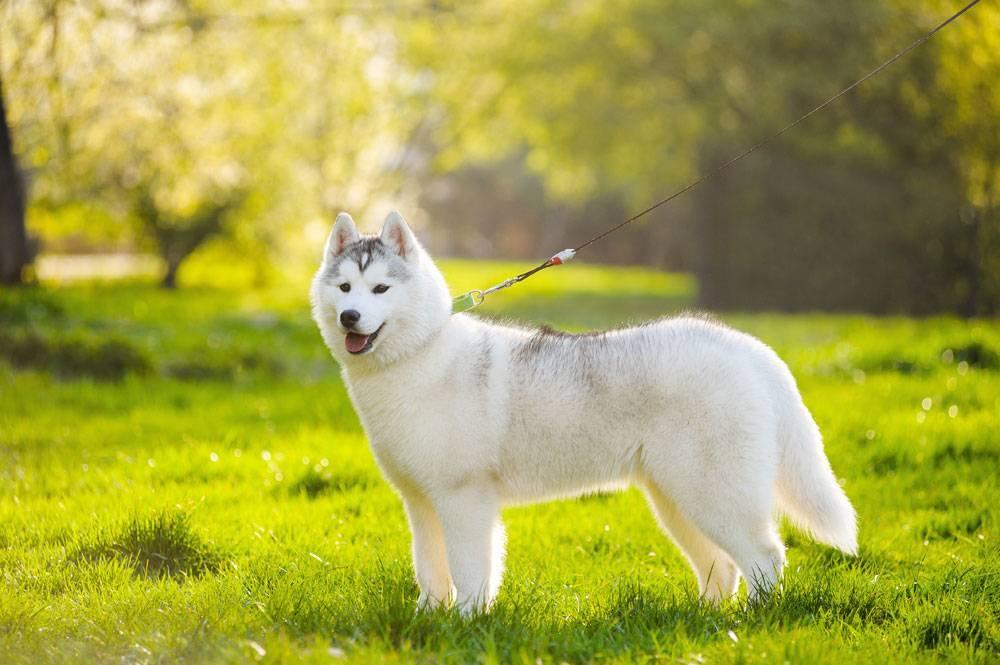 Чем обработать собаку от клещей: 15 лучших средств