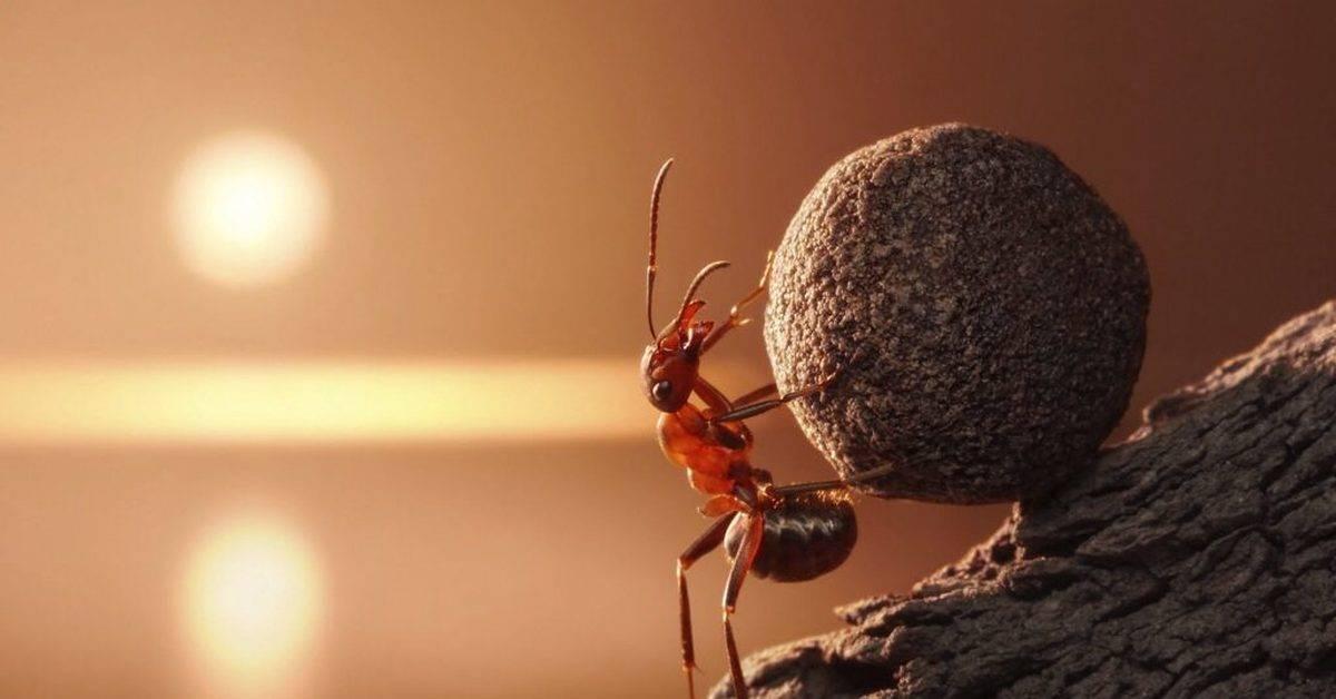Какой вес может поднимать. сколько весит муравей? сколько ног у муравья