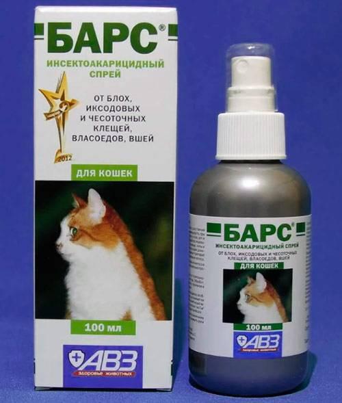 Вши у кошек: как выглядят, передаются ли человеку и чем лечить кота