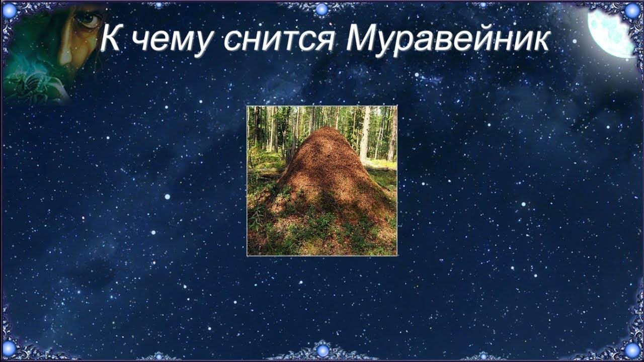 «муравейник к чему снится во сне? если видишь во сне муравейник, что значит?»