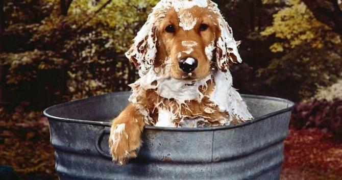 Признаки блох у собак