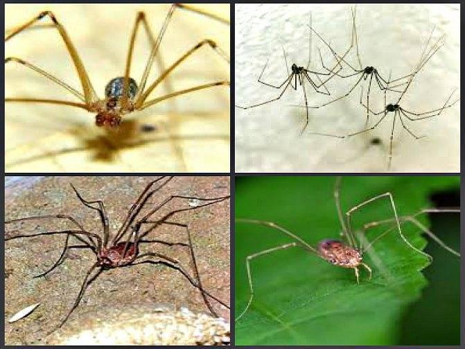 Как избавиться от пауков в квартире своими силами?