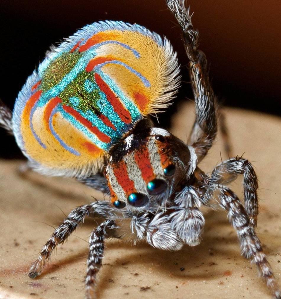 9 самых смертоносных и ядовитых пауков в мире