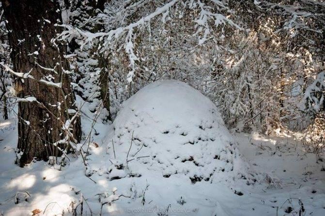 Как готовятся к зиме муравьи и делают ли запасы на зиму?