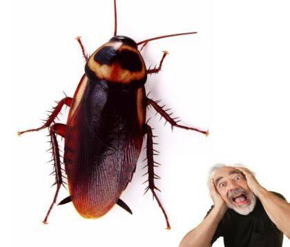 Что означает сон, в котором видишь живых тараканов — расшифровка по 41 соннику
