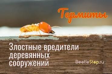 Термиты. как избавиться от муравьев термитов в доме? термиты черные