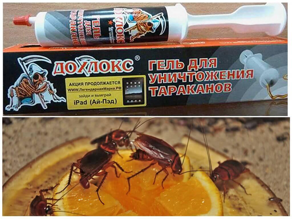 Гели дохлокс от тараканов