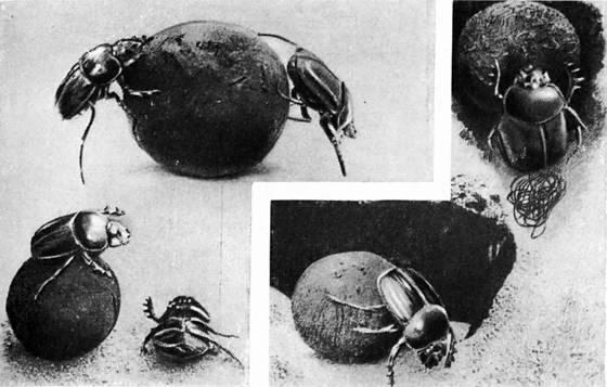 Жук усач – описание, виды и среда обитания, вред и методы борьбы