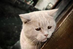 Лечение подкожного клеща у кошек в домашних условиях: фото, симпотомы и признаки, передаётся клещ ли человеку
