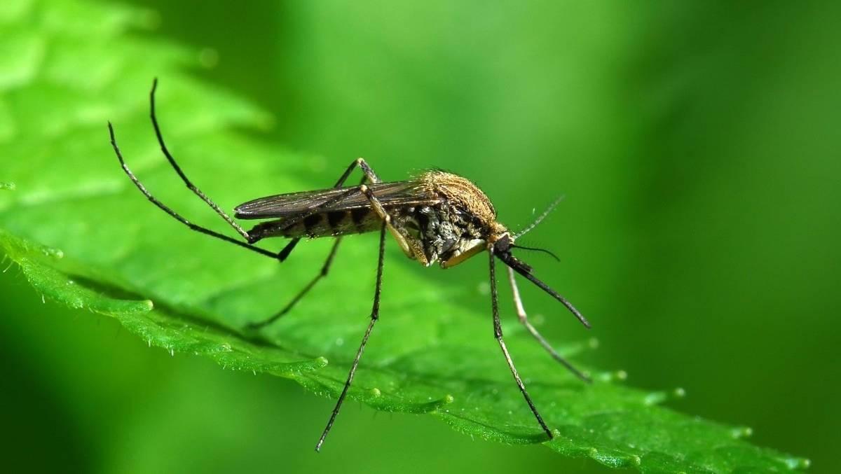Как видят комары и что их привлекает к человеку