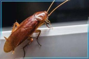 Средство таран от тараканов