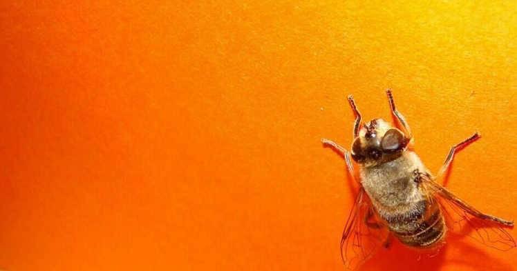 Ловушка для мух своими руками: как сделать в домашних условиях
