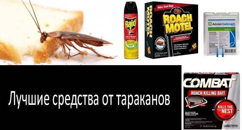 Как действует гель от тараканов?