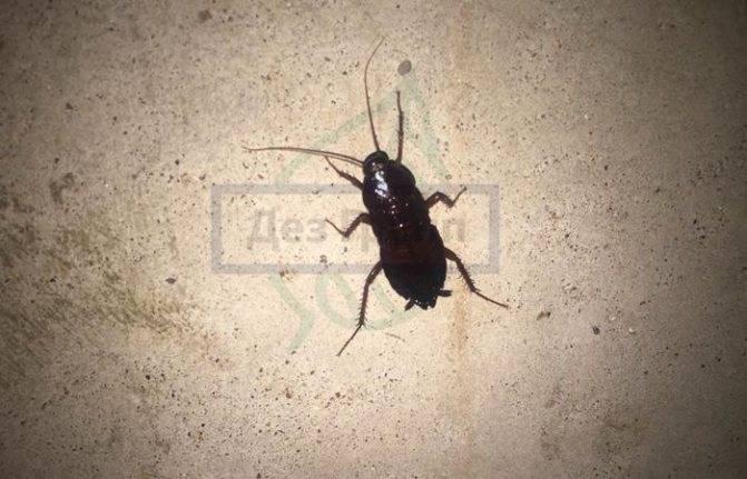 Куда обращаться, если в подъезде тараканы