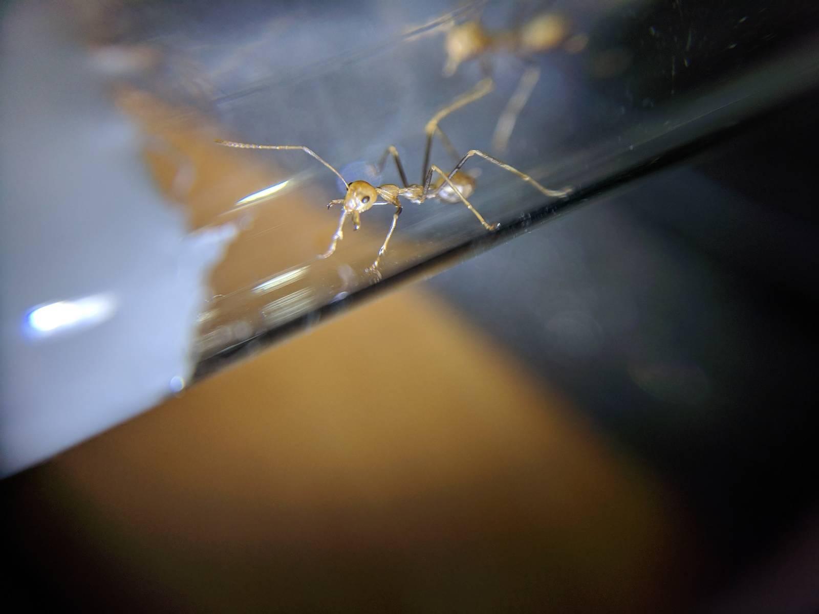18 эффективных рецептов дезинсекции, или как избавиться от муравьёв в доме