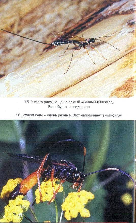 Профессиональные средства от насекомых