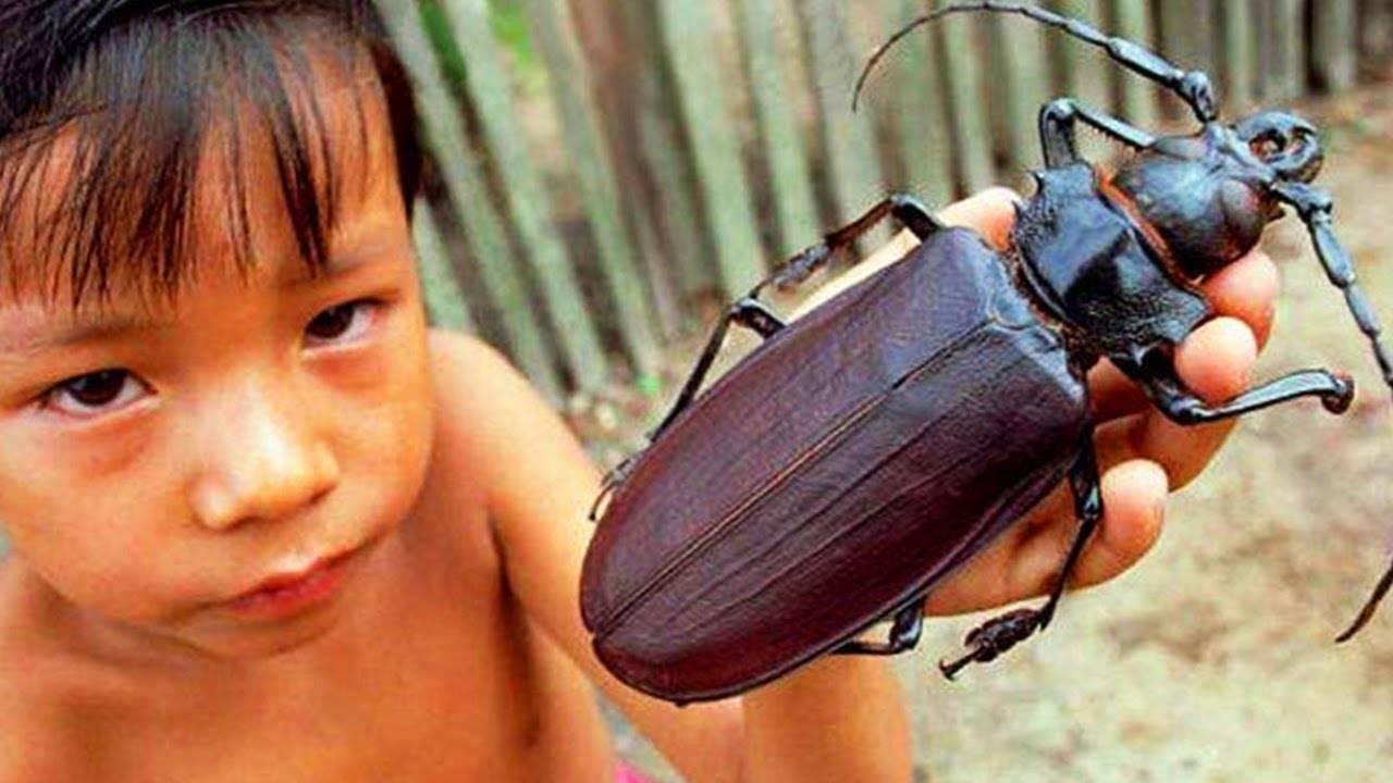 Приснились личинки колорадского жука