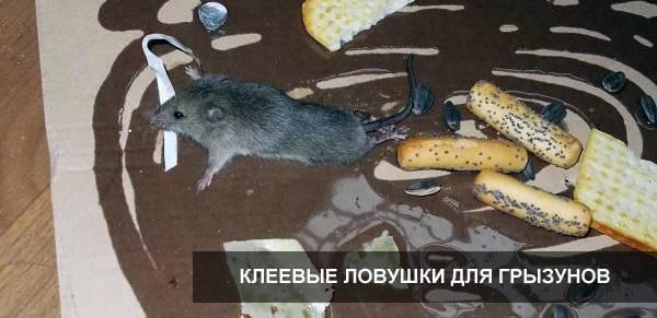 Устранение остатков клея для мышей