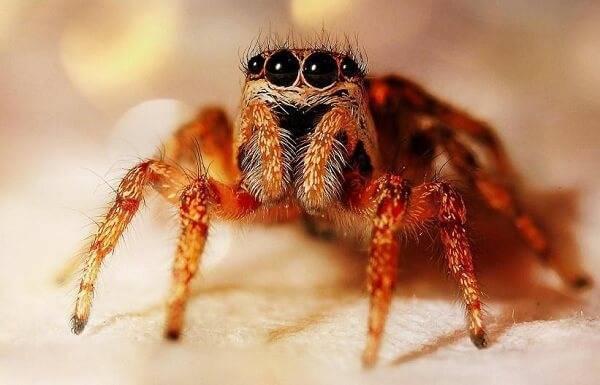 Топ-10 самые опасные пауки в мире
