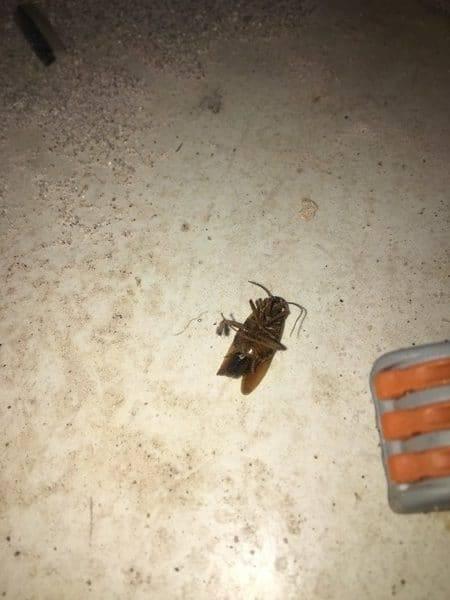 Служба уничтожения тараканов в москве и московской области