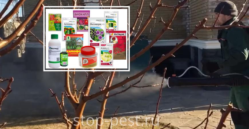 Муравьи и тля на плодовых деревьях — чем обработать растения?