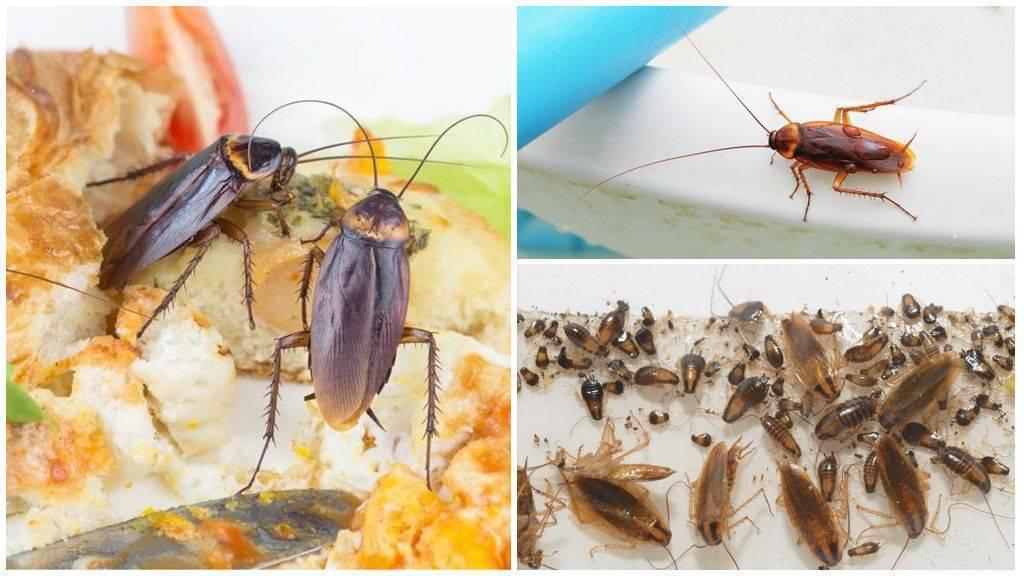 Появление прозвища тараканов стасиков