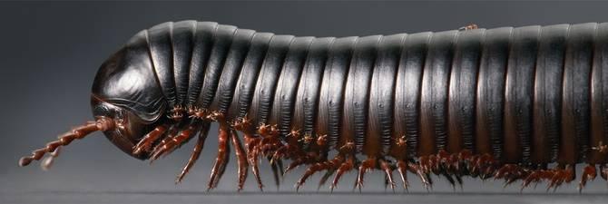 У насекомых холодильные ноги расположены на. сколько ног у муравья: основные признаки насекомого