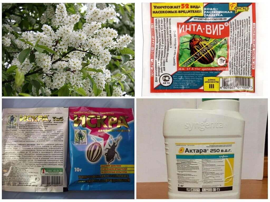 Народные и химические препараты против тли на черемухе