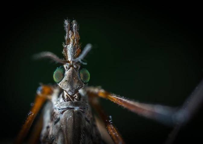 Интересный вопрос - до какого этажа долетают комары?