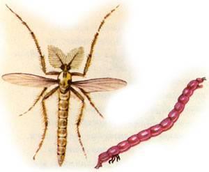 Живого места нет: как бороться снебывалым нашествием комаров